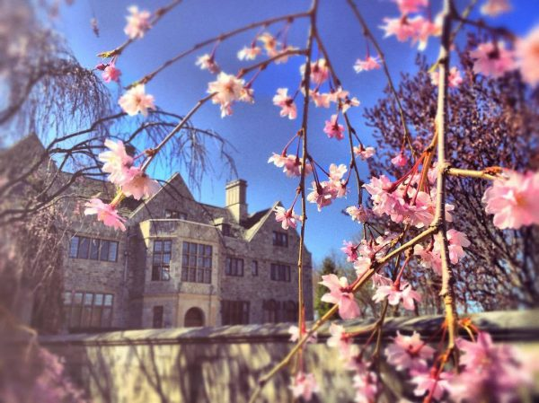 main building with cherry blossoms in foreground